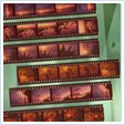 35mm negative strips scanned to DVD in Norwich, Norfolk